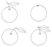 Giardino delizioso - un insieme di quattro arance con le foglie Fotografia Stock
