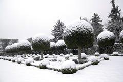 Giardino dell'albero e dei tassi della scatola sotto la neve (Francia Europa) Fotografie Stock