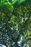 Giardino dell'albero per bellezza leggera fotografia stock libera da diritti