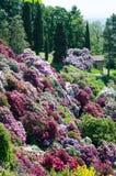 Giardino dell'azalea in Italia fotografie stock libere da diritti