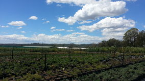 Giardino dell'azienda agricola Fotografia Stock