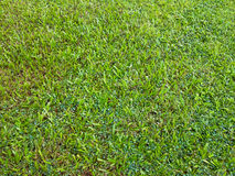 Giardino dell'erba Fotografie Stock