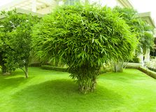 Giardino dell'erba verde e della pianta di bambù immagini stock libere da diritti
