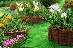 Giardino dell'orchidea Immagine Stock Libera da Diritti