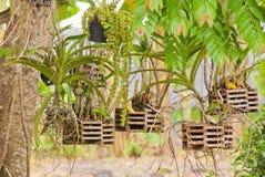 Giardino dell'orchidea immagini stock