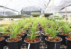 Giardino dell'orchidea Fotografia Stock Libera da Diritti