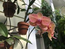 Giardino dell'orchidea Fotografia Stock