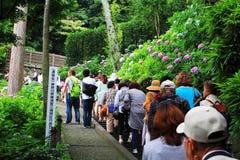 Giardino dell'ortensia nel Giappone Immagini Stock Libere da Diritti