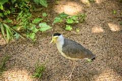 Giardino dell'uccello alla bella casa di campagna vicino a Leeds West Yorkshire che non è la fiducia nazionale Immagine Stock Libera da Diritti