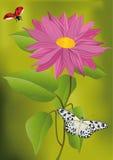 giardino della camomilla Fotografie Stock