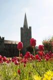 Giardino della cattedrale di St Patrick immagine stock