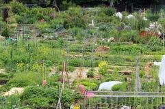 Giardino della Comunità Immagini Stock