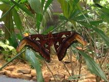 Giardino della farfalla Immagini Stock