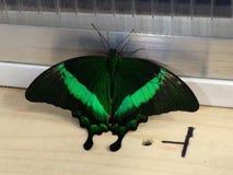 Giardino della farfalla Fotografia Stock Libera da Diritti