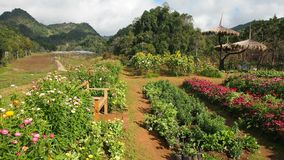 Giardino della flora in Doi Angkhang Fotografia Stock