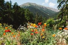 Giardino della montagna Fotografia Stock Libera da Diritti