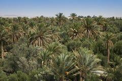 Giardino della palma Fotografia Stock Libera da Diritti