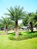 Giardino della palma Fotografia Stock