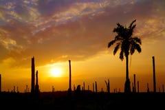 Giardino della palma della siluetta con il tramonto Immagini Stock Libere da Diritti