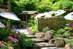Giardino della peonia Immagine Stock