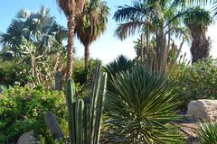 Giardino della pianta Fotografia Stock