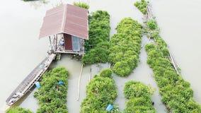 Giardino della pianta acquatica e della casa di galleggiamento fotografia stock libera da diritti