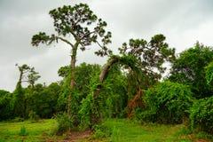 Giardino della pianta di largo di Florida Immagine Stock