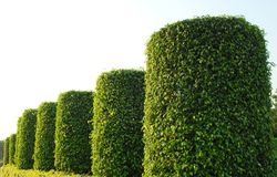 Giardino della pianta verde Immagine Stock Libera da Diritti
