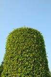 Giardino della pianta verde Fotografia Stock Libera da Diritti