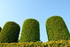 Giardino della pianta verde Immagine Stock