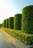Giardino della pianta verde Immagini Stock