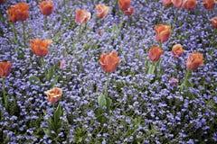 Giardino della primavera Fotografia Stock