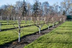 Giardino della primavera Immagini Stock
