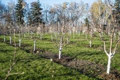 Giardino della primavera Immagini Stock Libere da Diritti
