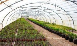 Giardino della serra Fotografia Stock Libera da Diritti