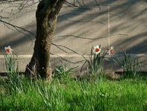 Giardino della sorgente Immagine Stock Libera da Diritti
