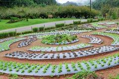 Giardino della verdura di coltura idroponica Immagine Stock
