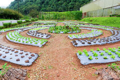 Giardino della verdura di coltura idroponica Fotografia Stock
