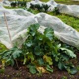 Giardino della verdura fresca Fotografia Stock Libera da Diritti