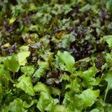 Giardino della verdura fresca Fotografie Stock