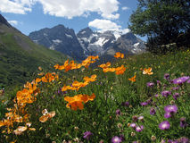 Giardino delle alpi fotografie stock libere da diritti