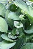Giardino delle foglie. Fotografia Stock Libera da Diritti