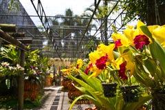 Giardino delle orchidee Immagine Stock Libera da Diritti