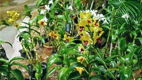 Giardino delle orchidee stock footage