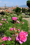 Giardino delle Rose in Florence, Tuscany, Italy Royalty Free Stock Image