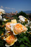 Giardino delle Rose in Florence, Tuscany, Italy Stock Images