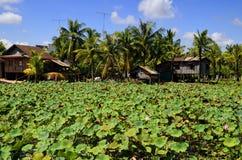Giardino dentellare del giglio di acqua Kampot - in Cambogia Fotografia Stock Libera da Diritti
