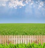 Giardino di agricoltura immagini stock libere da diritti