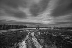 Giardino di autunno con gli alberi di cachi e la mattina nuvolosa nebbiosa caduta delle foglie presto Fotografia Stock Libera da Diritti