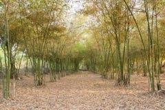 Giardino di bambù Immagini Stock Libere da Diritti